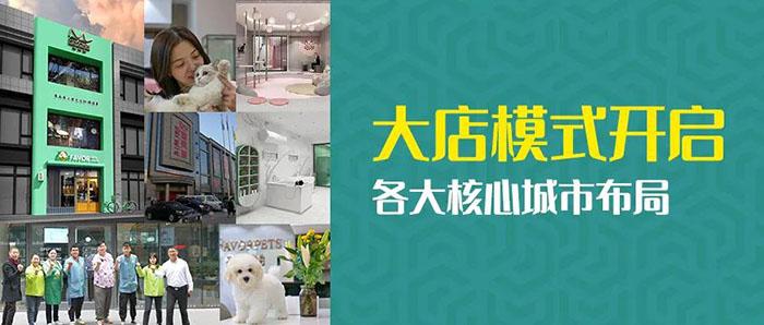 """大店模式开启,各大核心城市布局""""圣宠&猫有家""""旗舰店"""